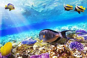 fondale-colorato-barriera-corallina-ras-