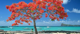 Red Tree - Mauritius .jpeg