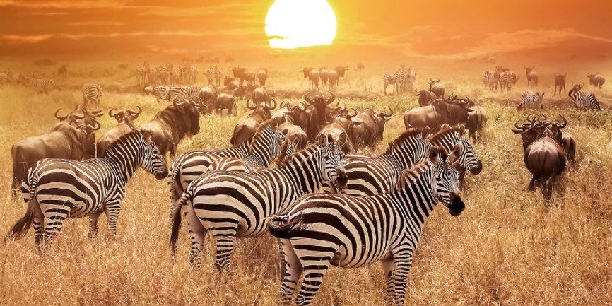 TANZANIA Zebre.jpeg
