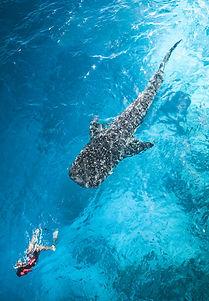 Whale03.jpg