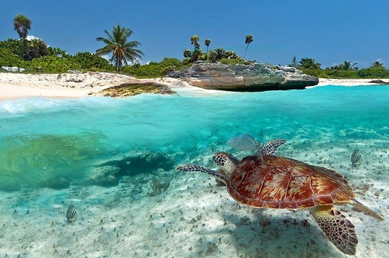 viva.-Zanzibar.-ET.05.09.2018.jpg