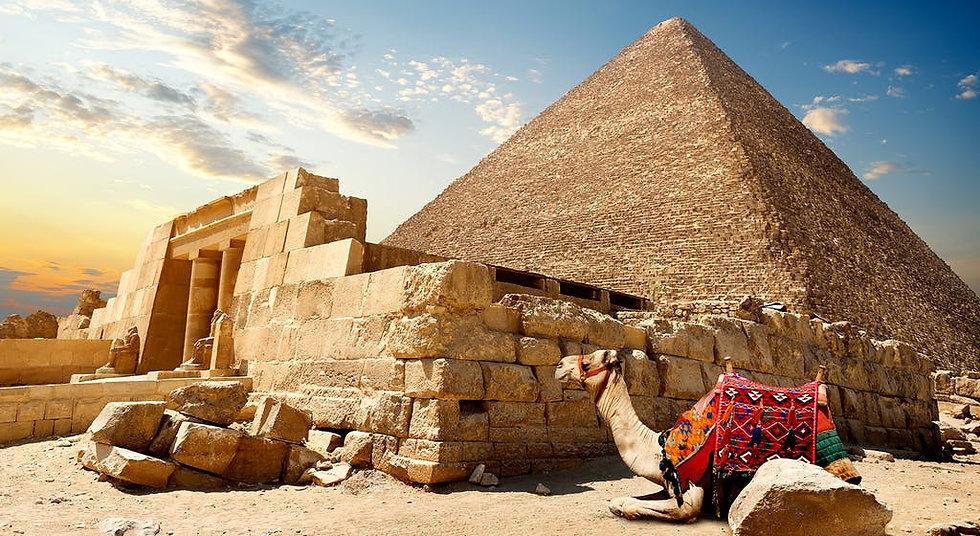 cammello-piramidi-di-giza-cairo-egitto-c