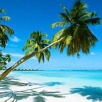 ombre-di-palme-spiaggia-fine-bianca-mare
