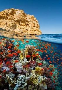 vista-sottomarina-fondale-pesci-rosci-ba