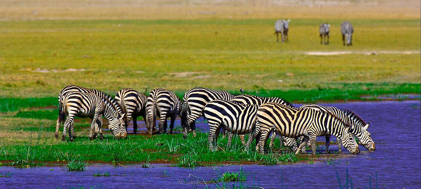 Amboseli Zebre - Kenya.jpg