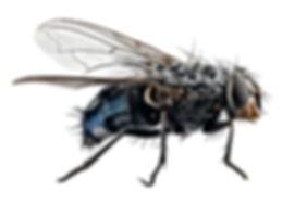 Fly (1).jpg