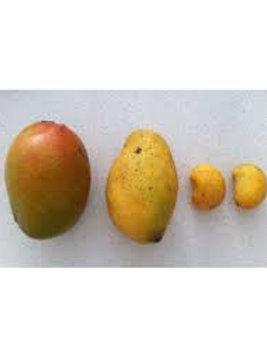 Mango Petacón
