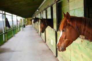 Ein Pferd in der Sauna klingt verrückt - was steckt dahinter?