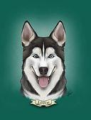 husky louve éducation chien