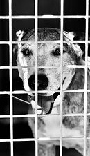 refuge arpan chien adopté