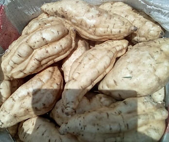 White sweet potato at Engoho Farm.jpg