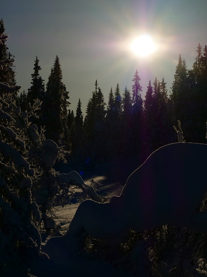Kjell Bergum natur 6 - 1.jpeg