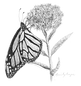 Monarch_edited.png