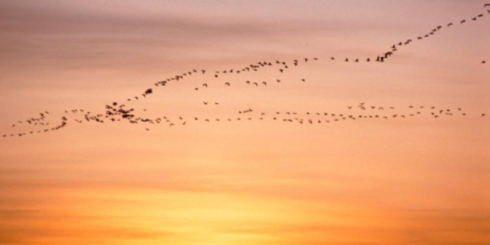 Zugvogeltag