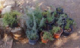 Garden club Plants_.jpg