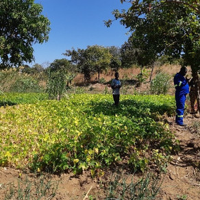 HORTICULTURE AND POULTRY, ZAMBIA