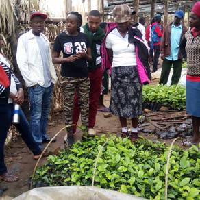 EXCHANGE COFFEE COOPS, UGANDA