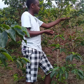 WHY I LOVE COFFEE FARMING, RWANDA