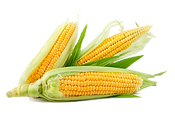 6-2-corn-transparent.png