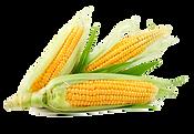 6-2-corn-transparent.png