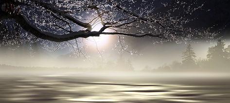 nature-4614210.jpg