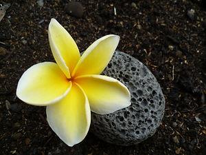 Schamanische Heilarbeit Hawaii Christine
