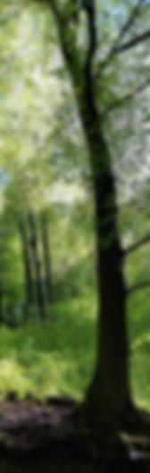 Baum1_edited.jpg