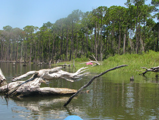 A short distance from the Pines public boat launch