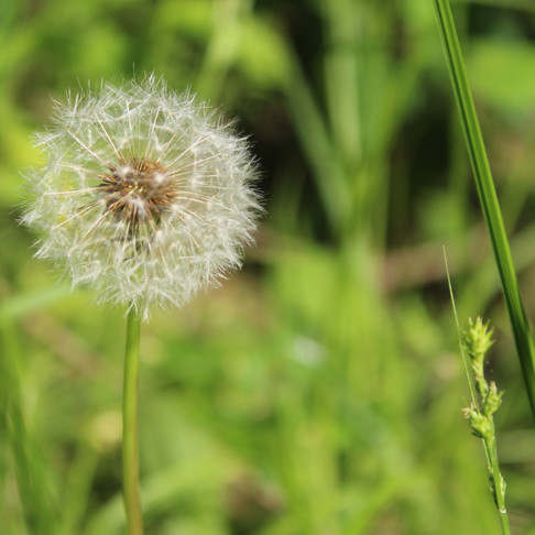 svadhyaya: the seed of knowledge
