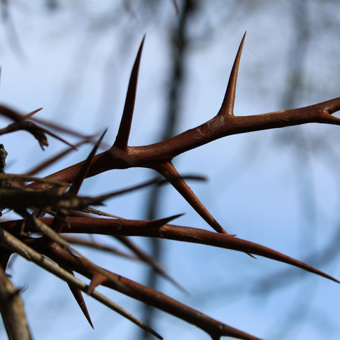  some thorns