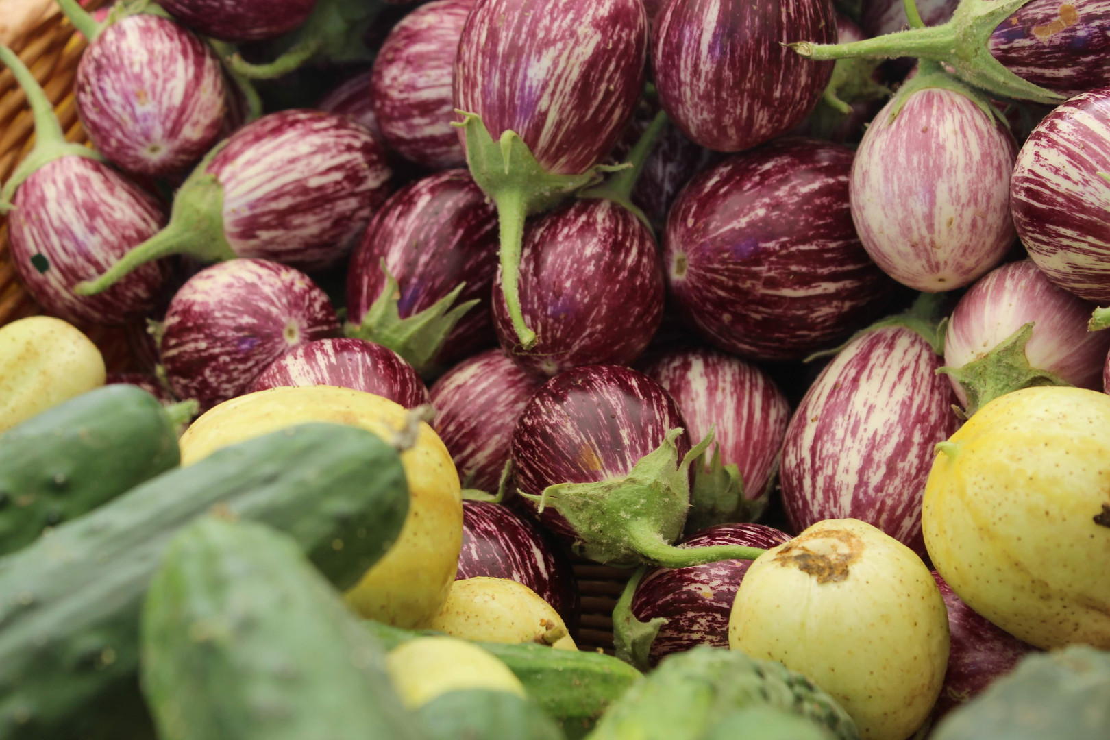 eggplant+cukes.JPG.jpg