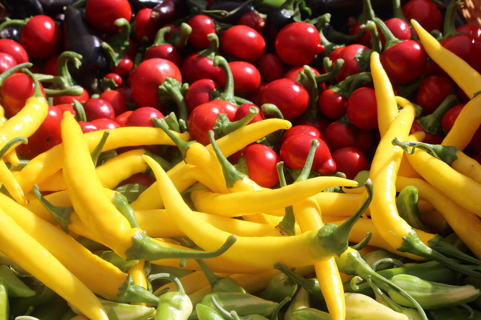 hot peppers.JPG.jpg