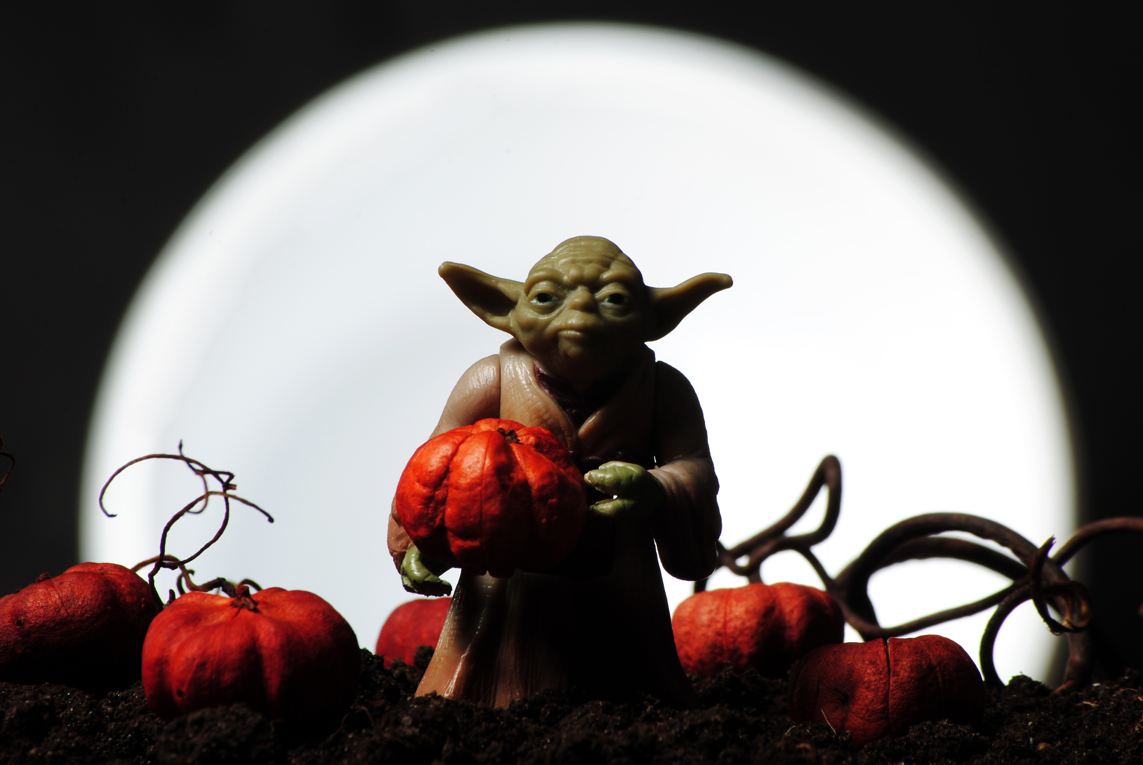 Yoda Pumpkin Patch