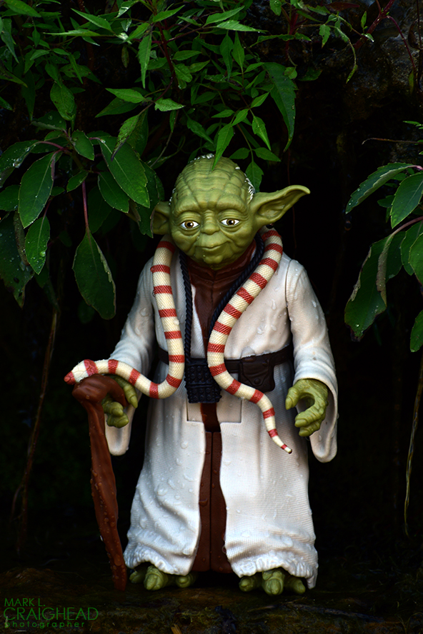 Yoda Nature ewm
