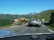Pyrenees-2014-02.jpg