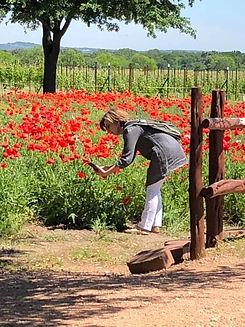 Flower Photographing.jpg