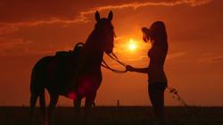 Programas com cavalos