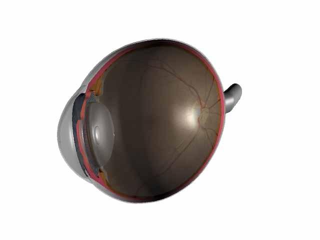 Eye inner vew