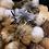 Thumbnail: Schildkraut Fur Pom Poms