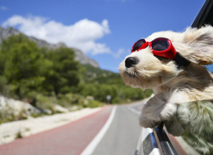 Three Marketing Projects for the Dog Days of Summer