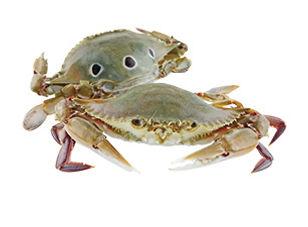 crab 2 Wix.jpg