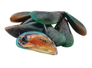 หอยแมลงภู่ไทย Wix.jpg