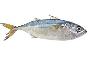 ปลาทู รูปใหม่ Wix.jpg