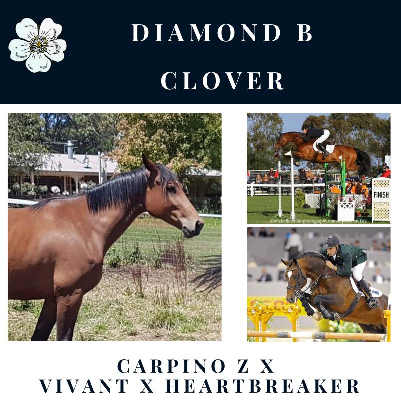 Diamond B Clover.png