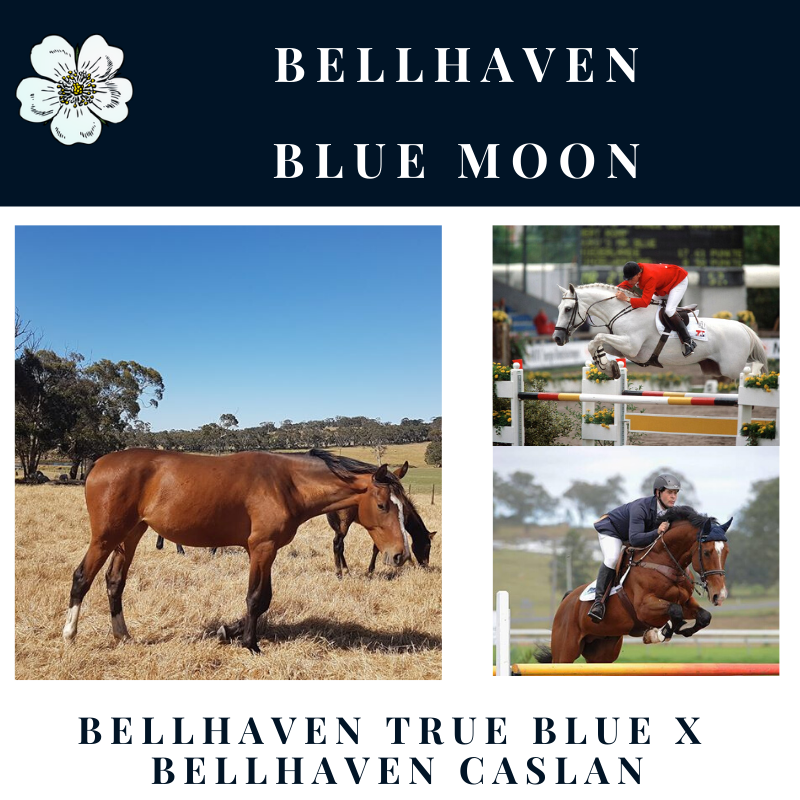 Bellhaven Blue Moon.png