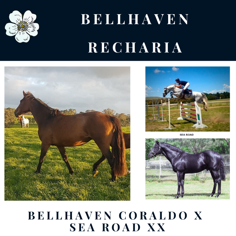 Bellhaven Recharia.png