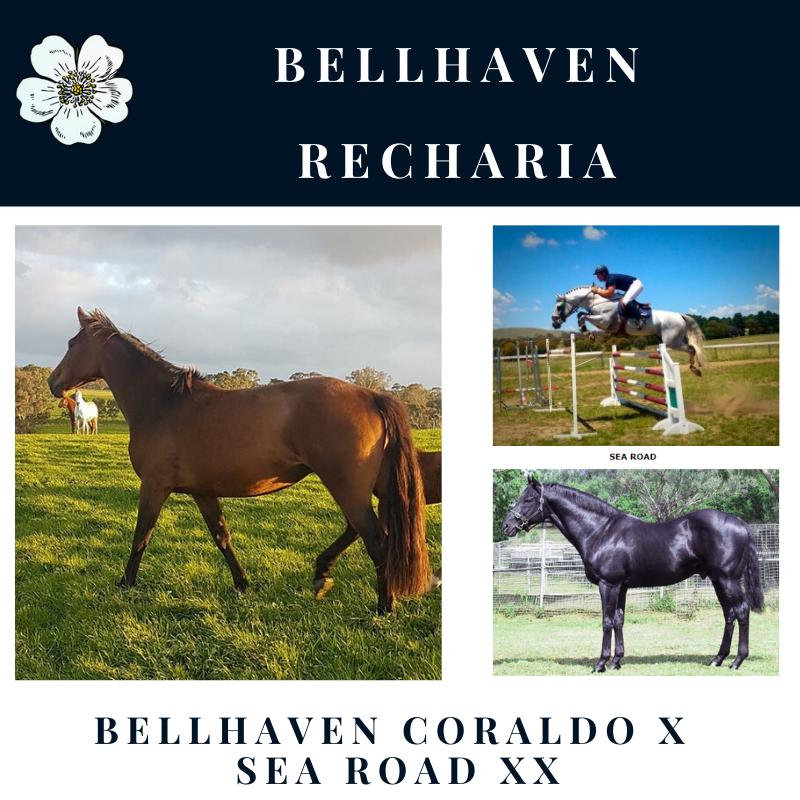 Bellhaven Recharia.png