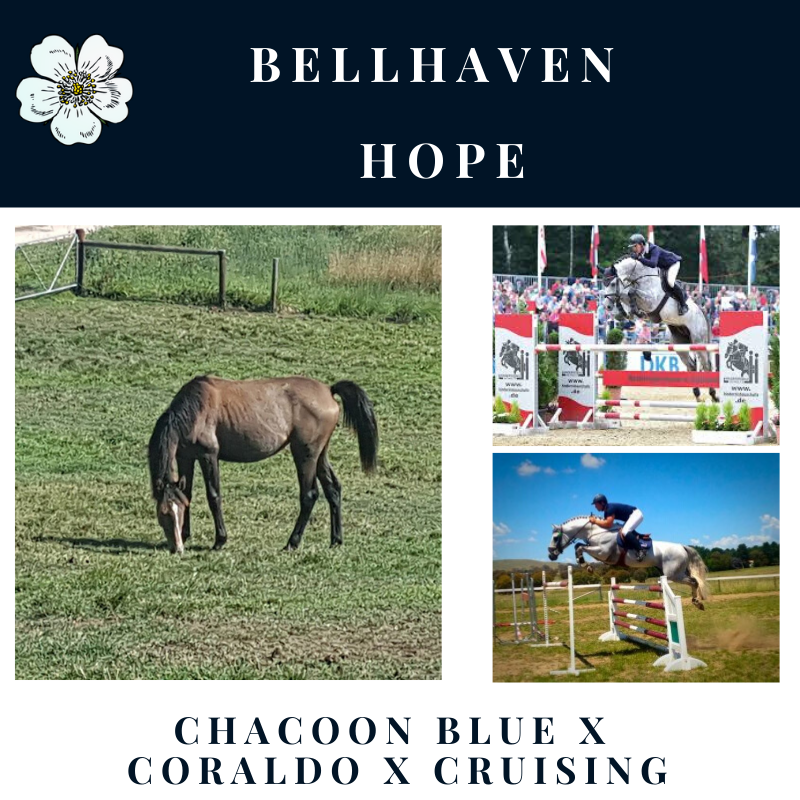 Bellhaven Hope.png