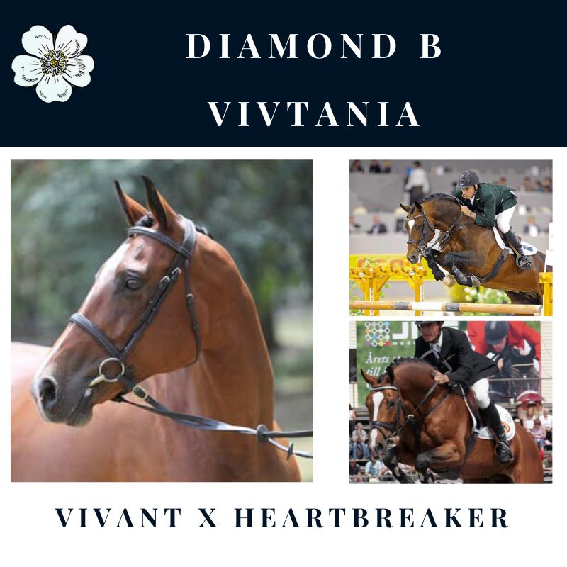 Diamond B Vivtania.png