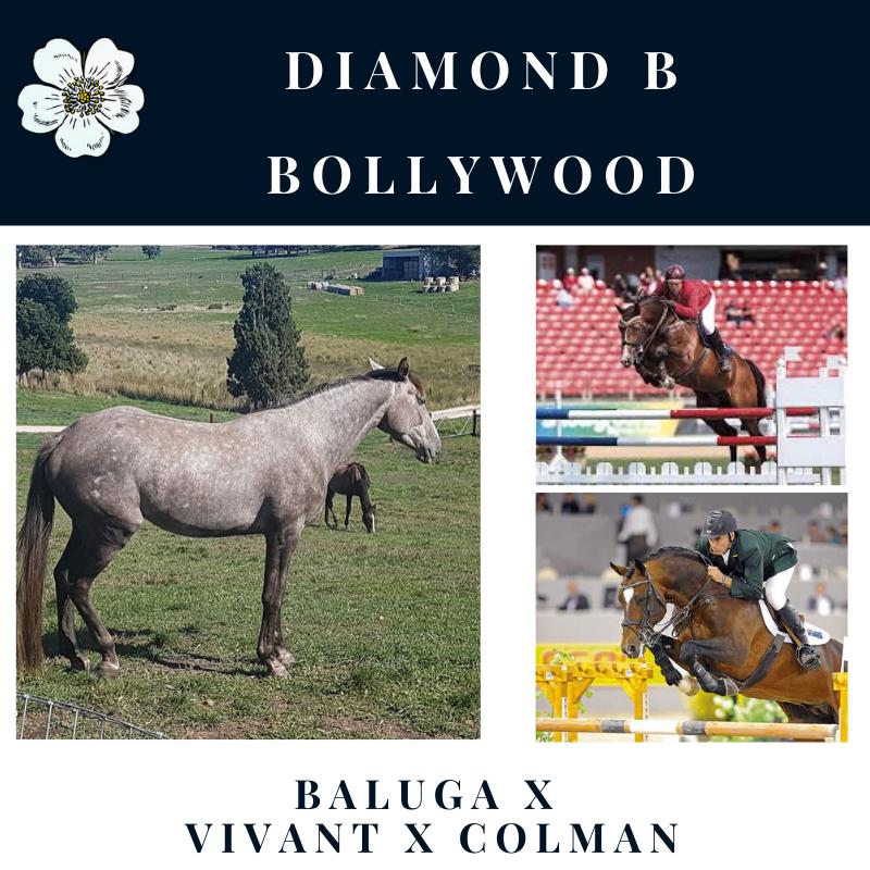 Diamond B Bollywood.png